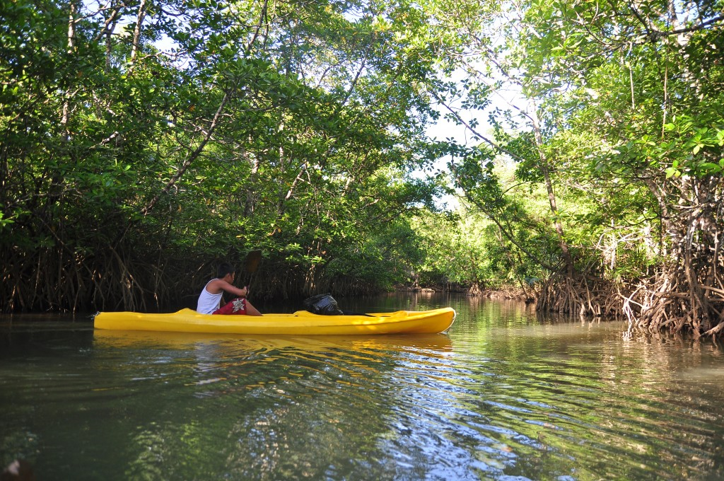 Mangrove Kayaking Kingfisher National Park