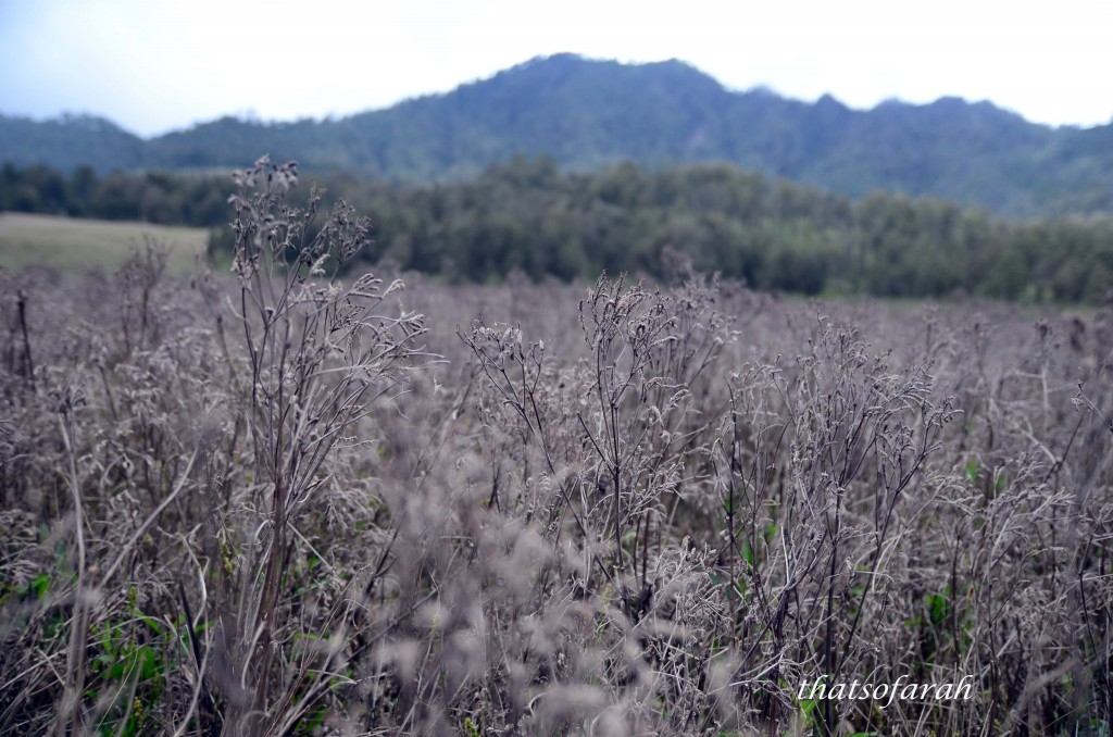 Drying Plants at Semeru