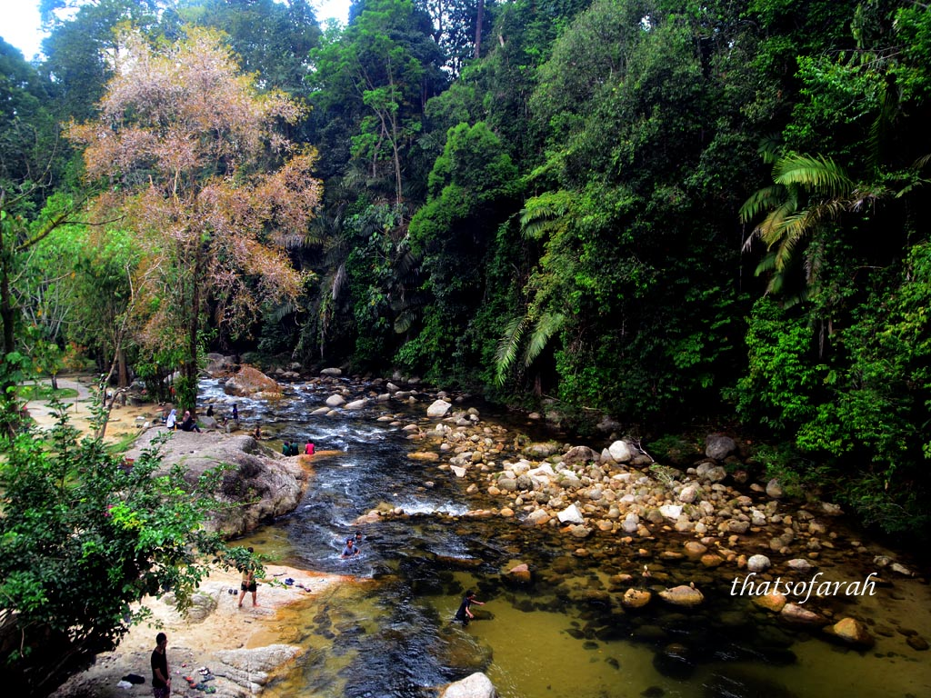 Sungai Sedim Tree Top Walk
