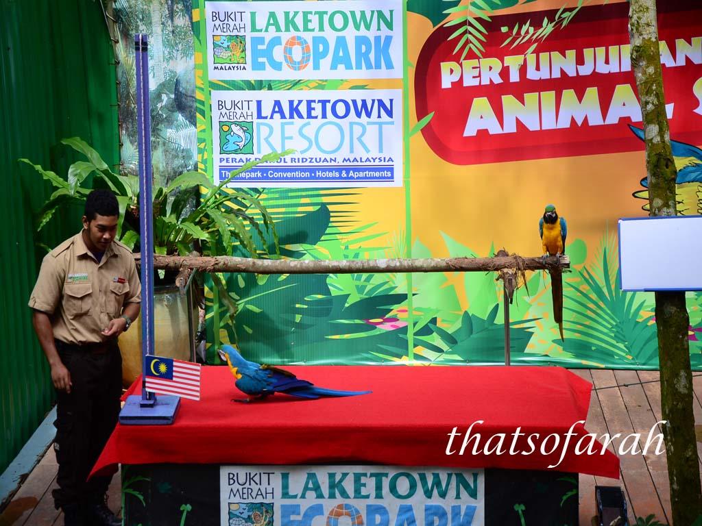 Animal Show Bukit Merah Ecopark