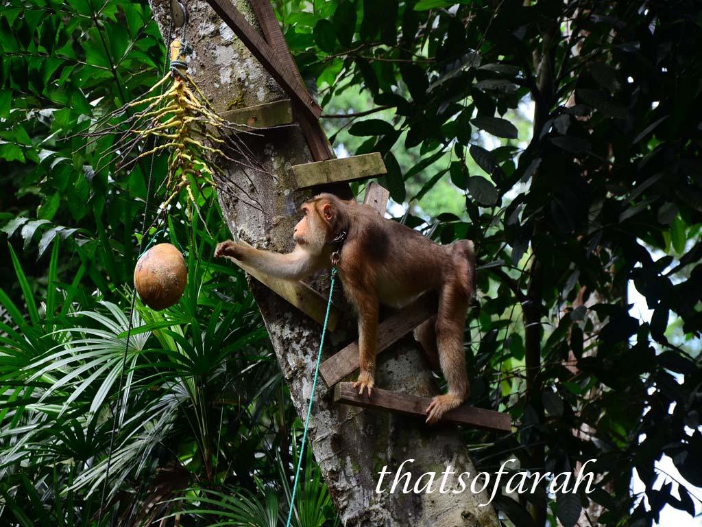 Animal Show Bukit Merah