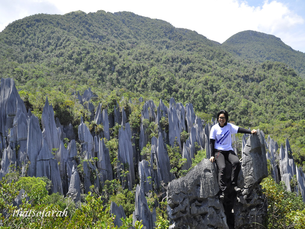 Mulu Pinnacles
