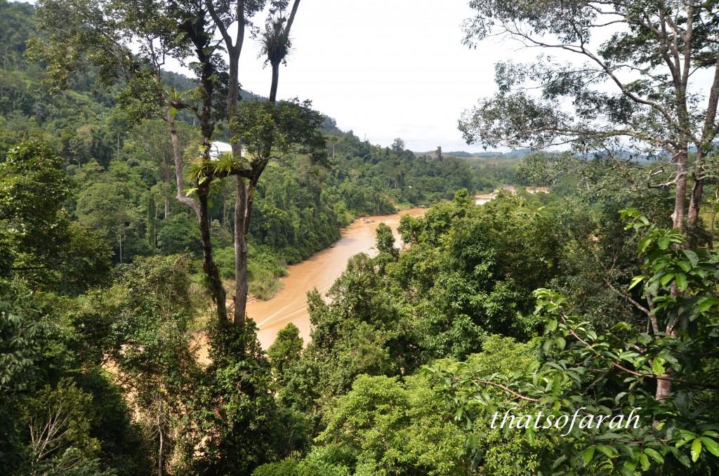 Sungai Tembeling from Canopy Walkway