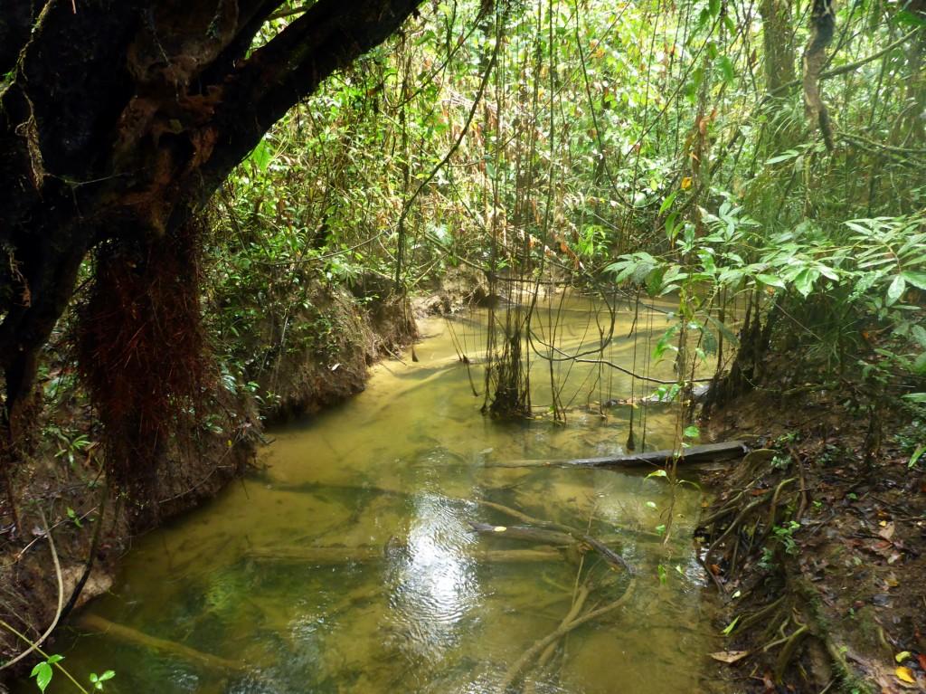 River in Mulu