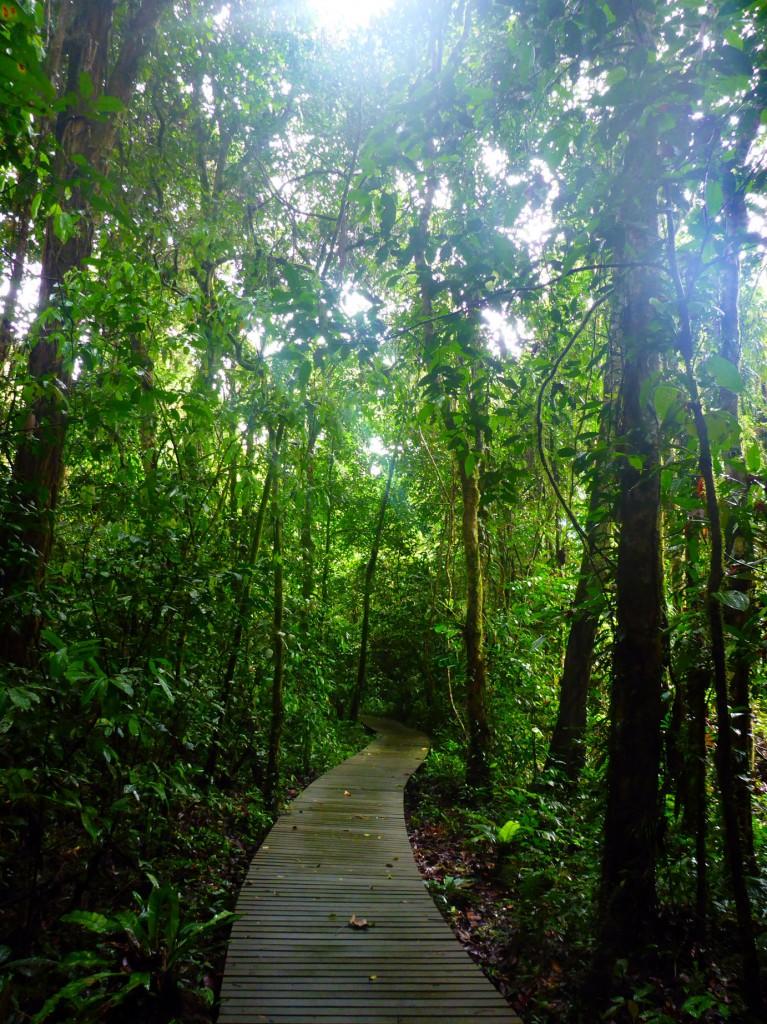 Mulu Botany Trail
