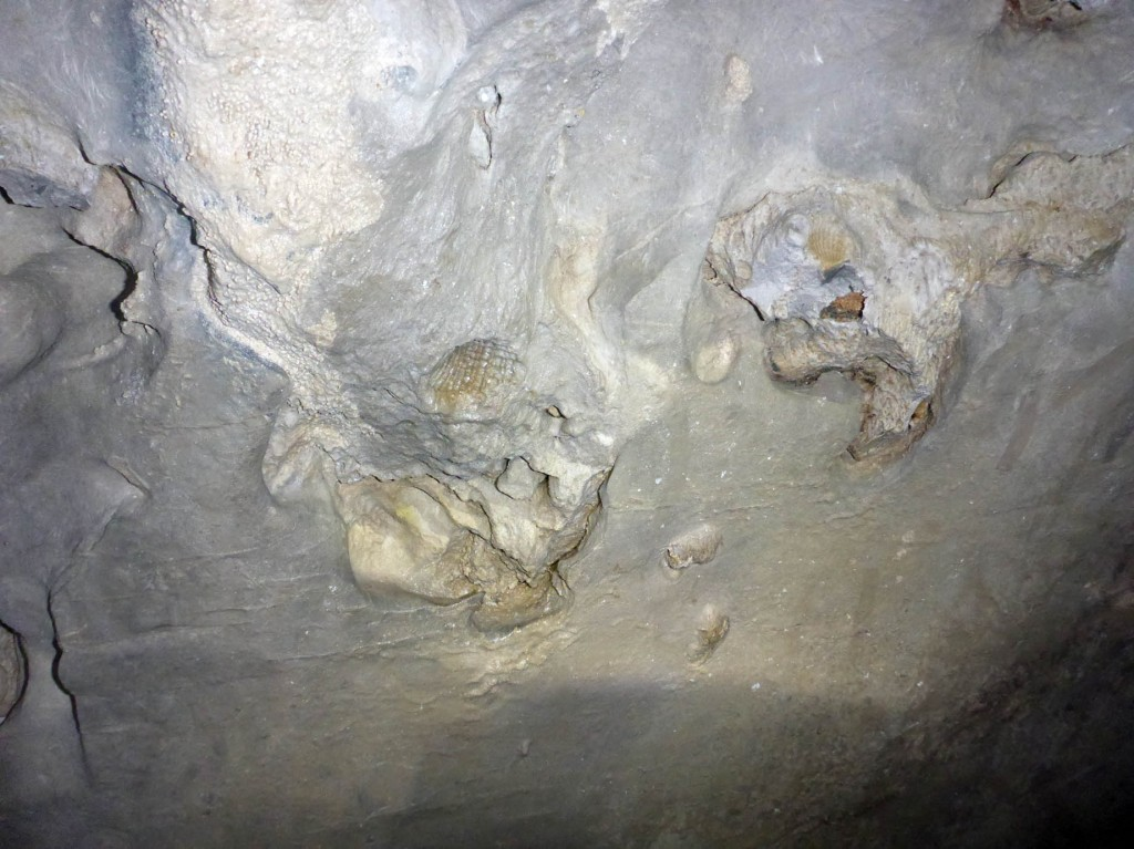 Fossil Racer Cave Mulu
