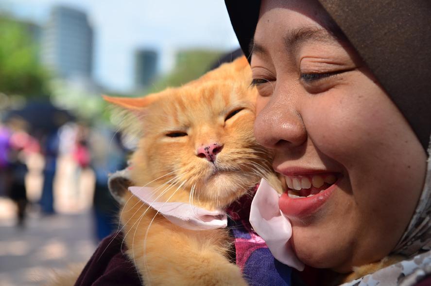 Cat Floria Putrajaya 2014