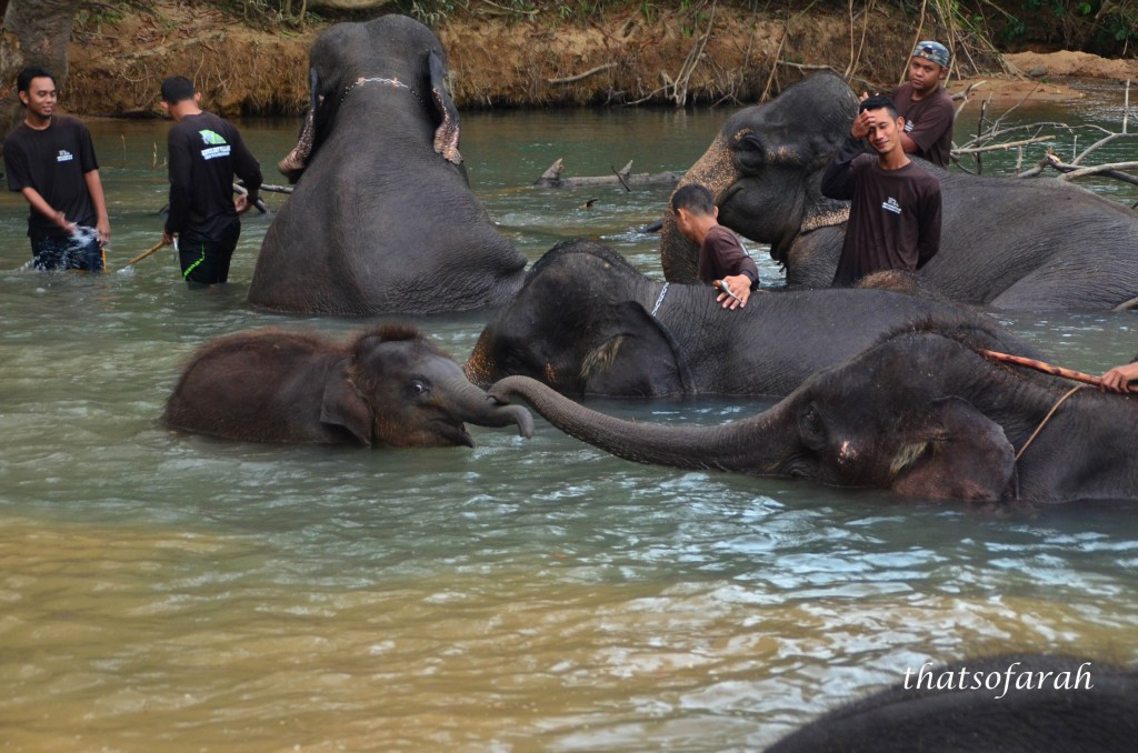 Kenyir Elephant Sanctuary