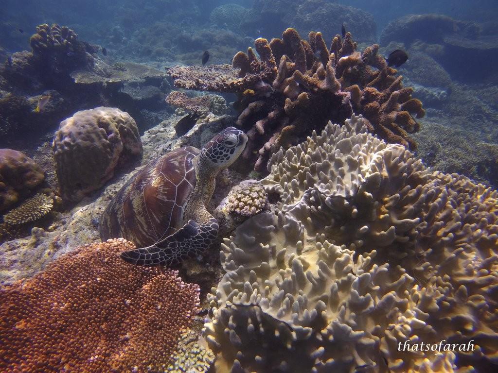 Mid Reef, Sipadan Island