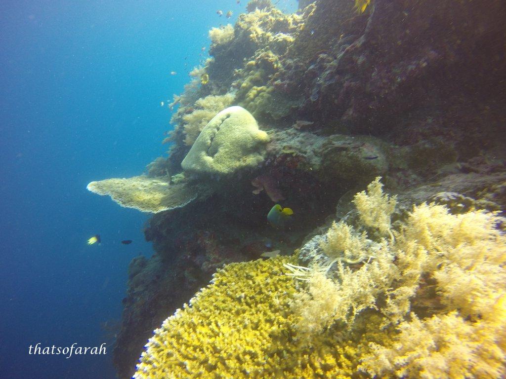 5d4n borneo divers mabul resort part 1 - Sipadan dive sites ...