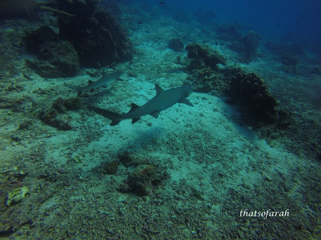 Barracuda Point, Sipadan Island
