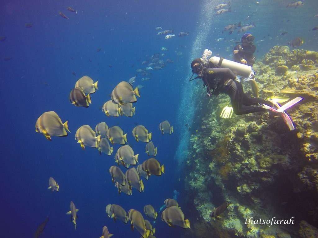 Diving in Sipadan