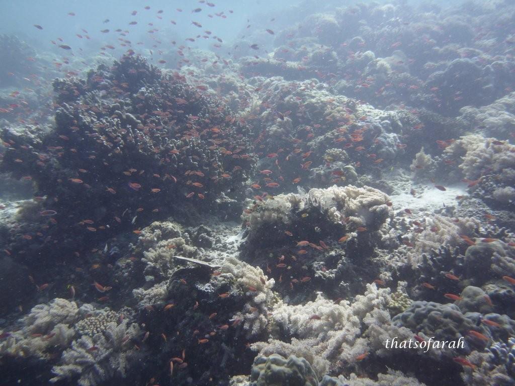 Big Aquarium Sipadan