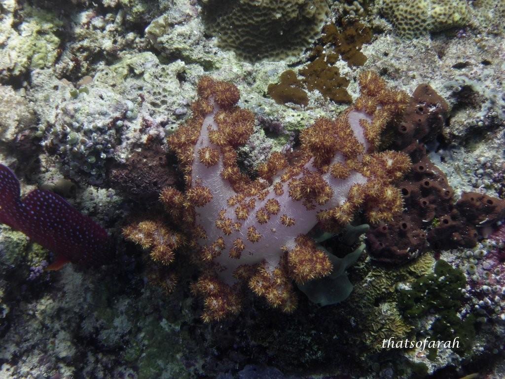 Sipadan Coral