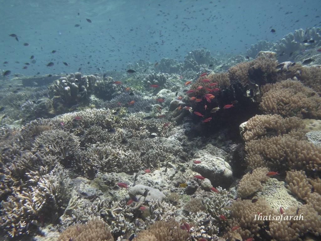 Sipadan Dive
