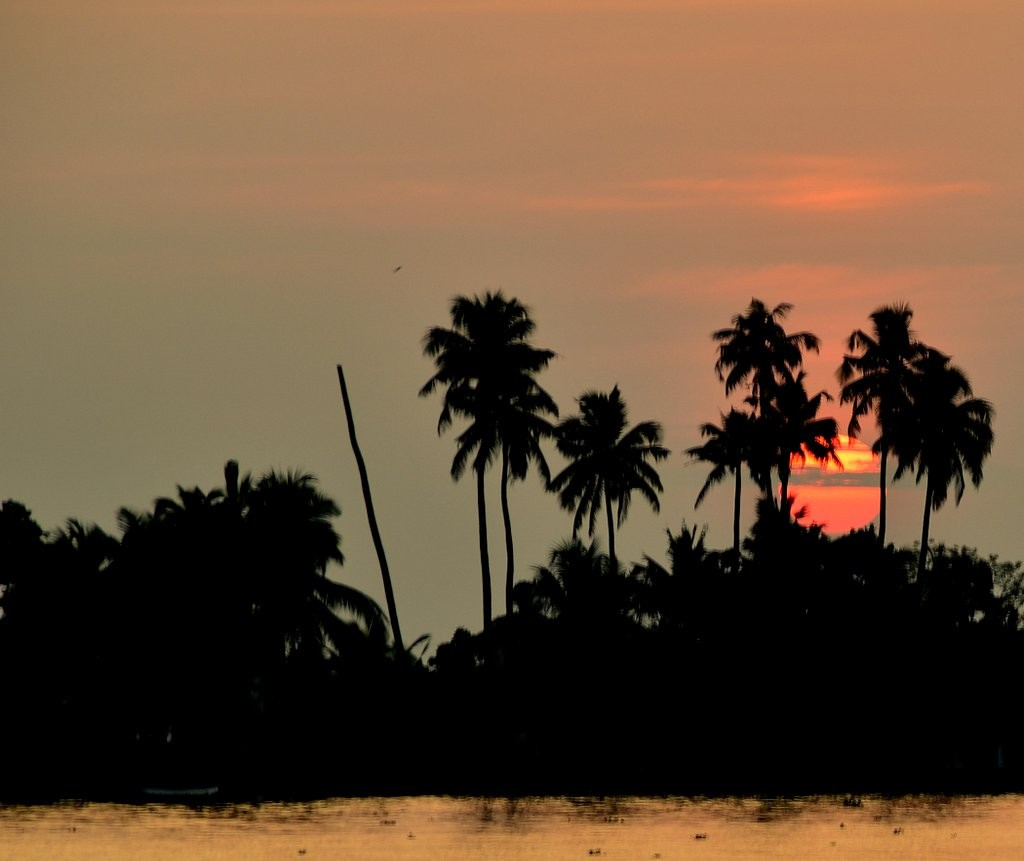 Everyone Must Visit Kerala backwaters atleast once in a lifetime