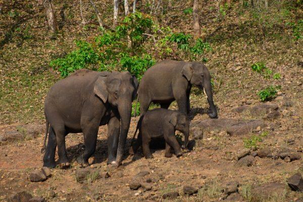 Wildlife Spotting at Periyar Tiger Reserve, Kerala