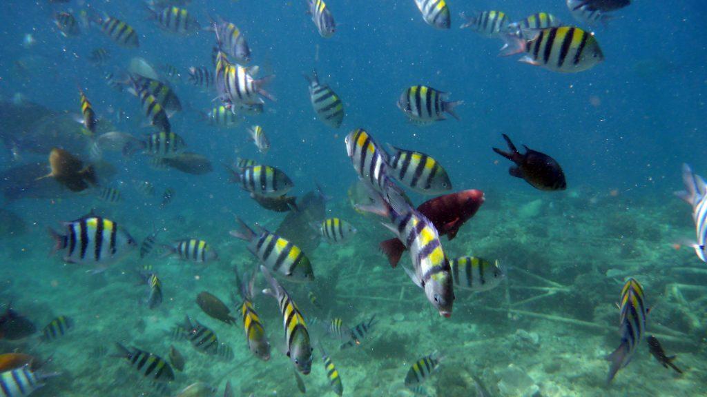 Snorkelling at Gili Meno