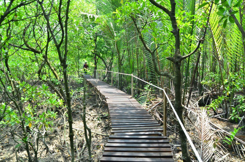 Taman Rekreasi Paya Bakau Kampung Sijangkang