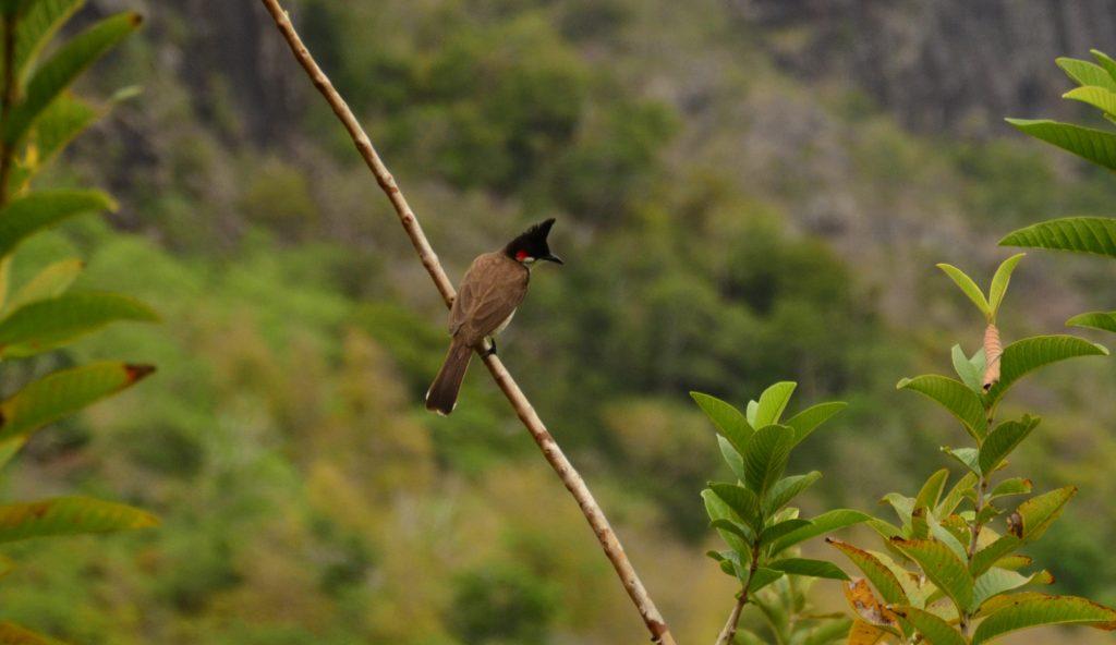 Birds of Mauritius