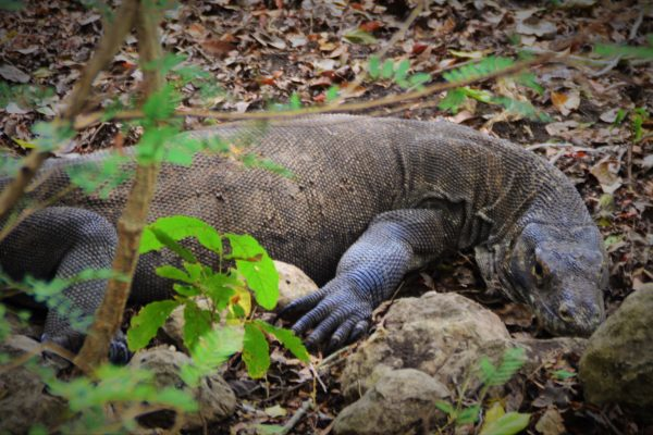 A Trip to Komodo National Park (1)